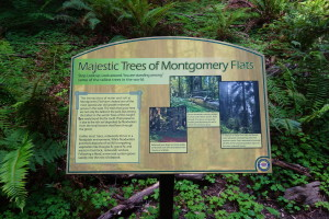One of a group of very well executed information signs recently added along the loop trail