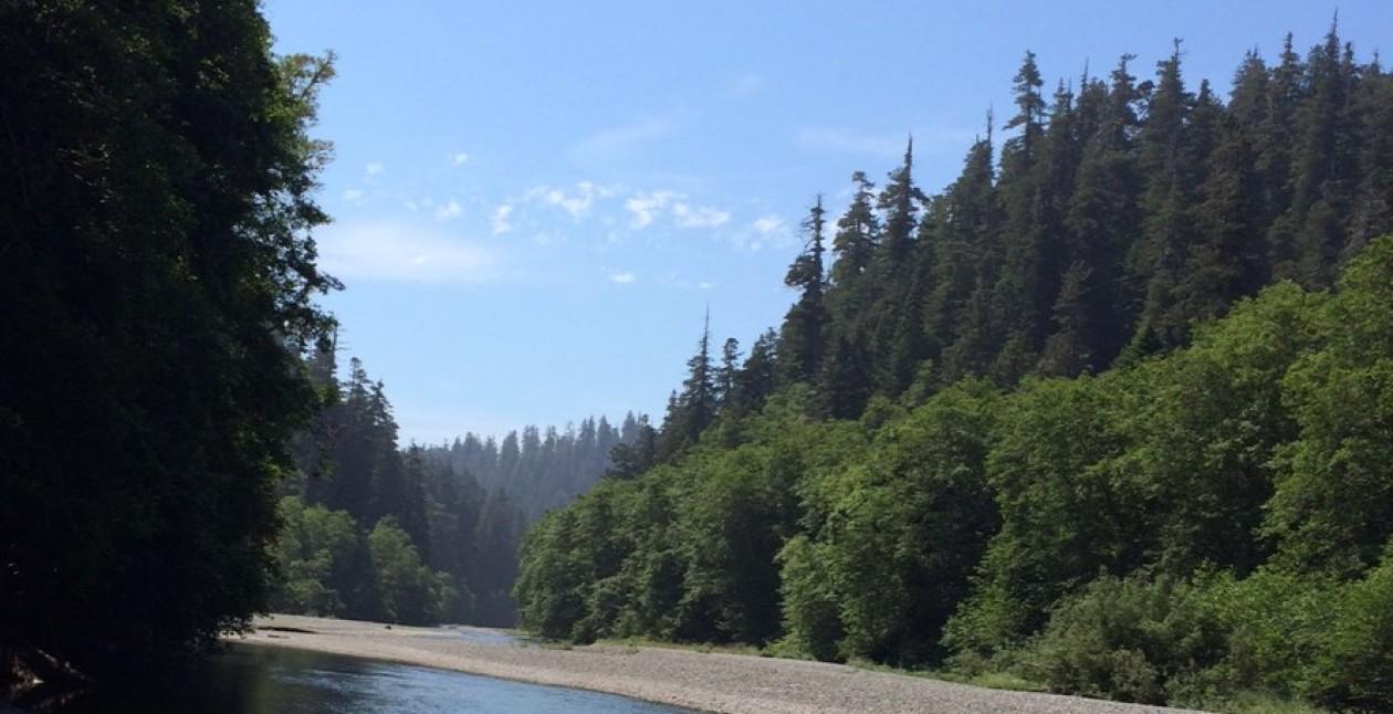verylargeandtallredwoods