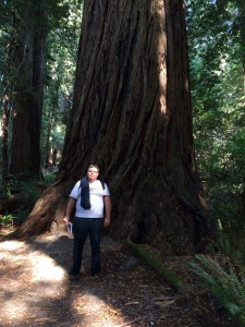 371 foot redwood in Redwood National Park