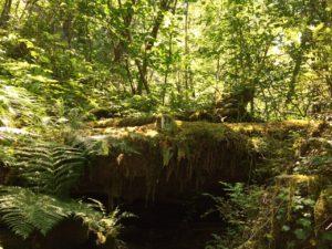 Log Pile Near Hyperion