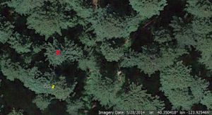 Founders Grove - tree to fall marked with X. (Image from Google Earth)