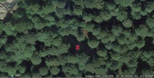 Harper Flat - area left by fallen tree marked by X (Image from Google Earth)